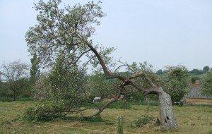 arbre sou 1