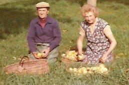 Papa et maman en corvée de ramassage des pommes en 1979.