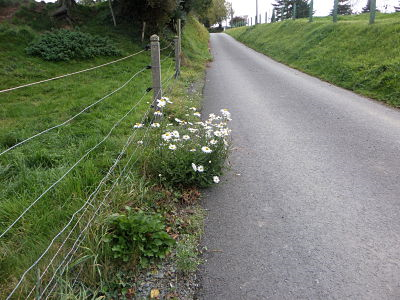 marguerites route