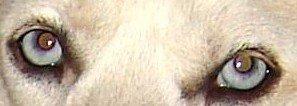 Les yeux sont-ils le miroir de l'âme ? dans CROQUENOTES yeux-chicane-2