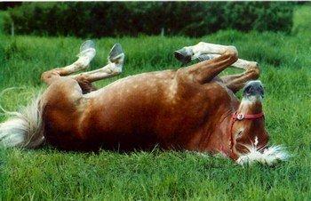 cheval se roule