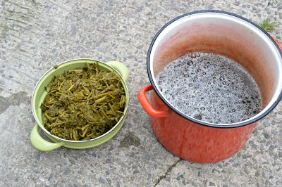 Enlever la plante bouillie pour ne conserver que le jus de teinture. Certains remettent, avec la laine et le bouillon, la plante dans un bas de nylon pour encore plus de couleur.