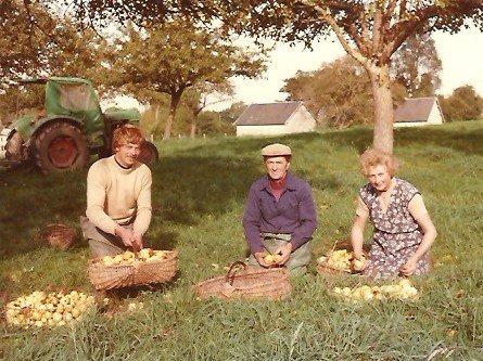 Mon frère, papa et maman ramassant les pommes dans deux des paniers confectionnés par Maurice.