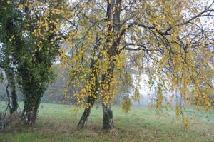 arbre féé O