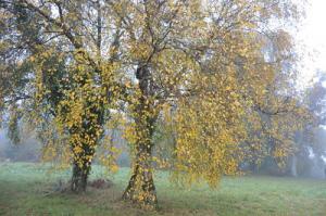Ses feuilles une fois mortes, l'arbre prépare déjà en secret les bourgeons du printemps, image d'espérance incessamment renouvelée.
