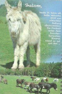 Shalom, 26 ans, arrivé en 2005 dans un des refuges gérés par l'association Pro Animale