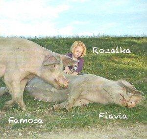 Famosa et Flavia en compagnie de Rosalka, le petite fille. Merci à Pro Animale pour toutes ces photos et pour leur œuvre de sauvetage de nos amis privés de langage humain.