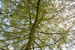 arbre 4 O