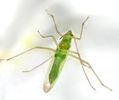 Merci à Insecte.org