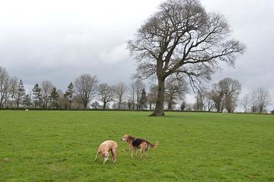 Des chiens qui pataugent dans la gadoue